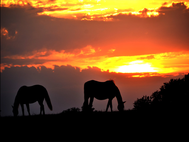 seven-oaks-ranch-sunset
