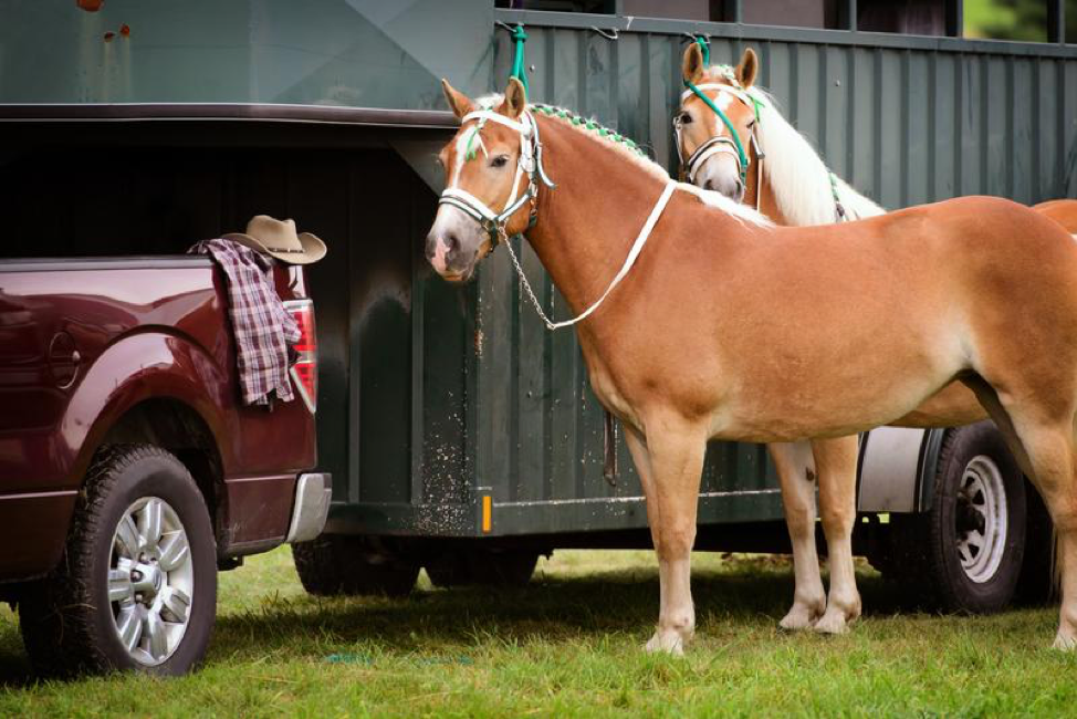 Must-Read Tips for Trailering Your Horse Long-Distance